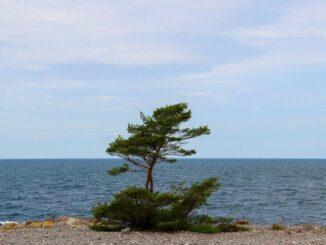 4 saker att se på Gotland